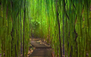 camino_de_bambues-1280x800